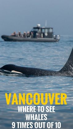 Find out everything you need to know before going on a whale watching tour in Vancouver, Canada. Everything to make your day out meeting wild Orcas truly memorable.  | Travel Vancouver, Canada | Family Travel.