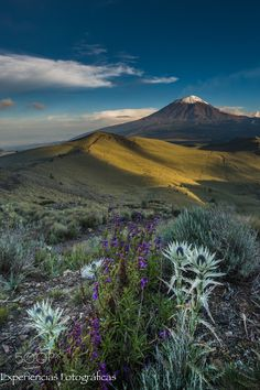 Mountain´s Rose with the Popocatépetl - Amazing mountain rose, with the volcano in the morning