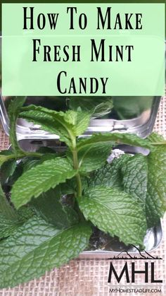 Herb Recipes, Canning Recipes, Candy Recipes, Dessert Recipes, Apple Recipes, Mint Herb, Pineapple Mint, Fresh Mint Leaves, Mint Leaves Recipe