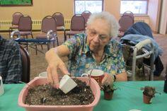 Rejuvenated garden therapy program for seniors. improves motor skills and sensory skills.
