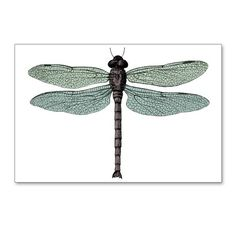 Dragonfly Postcards (Package of 8) on CafePress.com