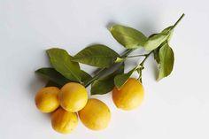 Meyer Lemon Recipes, Lemon Desserts, Tangerine Juice, Organic Market, Green Soup, Lemon Vinaigrette, Fruit In Season, Sweet Tarts, Instant Pot Pressure Cooker