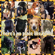 1/11/2016 - And they lived happily ever after!  Here are our K9s who found their furever homes.  Cookie, Pup Tucker, Cole, Judy, Polly, Reilly, Minnie, Dudley, Doll, Liberty, Gia, Dottie, Baby Sookie, Baby Annie, Jet, Sophie, and Benny are loving their new lives!