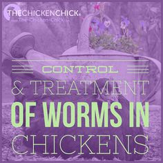 Control and treatment of worms in backyard chickens. www.The-Chicken-Chick.com