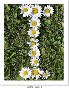 Free art print of Letters of daisies. Get up to 10 Gallery-Quality Art Prints for Free. Gift Card Printing, Daisy Art, Letter Art, Letters, Free Art Prints, Flower Wallpaper, Printable Art, Alphabet, Beautiful Flowers