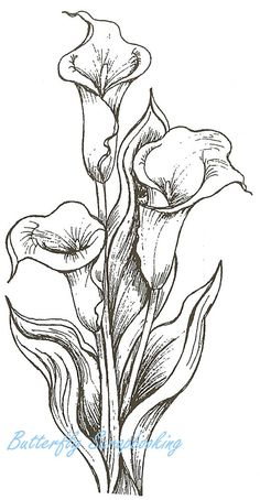Calla Lily Trio Flowers Wood Mounted Rubber Stamp Northwoods Rubber Stamp New