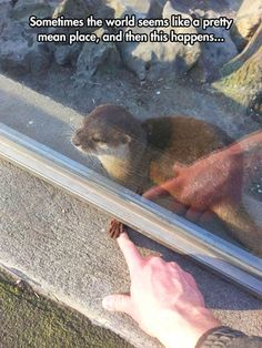 Funny pictures about I Want To Hold Hands With An Otter Too. Oh, and cool pics about I Want To Hold Hands With An Otter Too. Also, I Want To Hold Hands With An Otter Too photos. Funny Animal Memes, Cute Funny Animals, Funny Animal Pictures, Cute Baby Animals, Funny Cute, Animals And Pets, Cute Dogs, Cute Babies, Cute Pictures