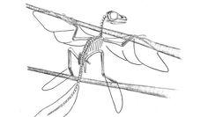 Gefiedertes Urwesen: Rütteln am  Stammbaum  der Vögel