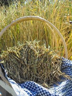 Sunny Corner Farm: How To Grow Rice at Home