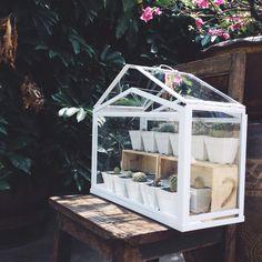 IKEA terrarium greenhouse for my cactus