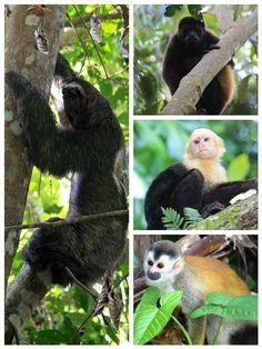 manuel antonio national park - wildlife
