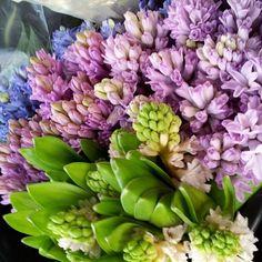 rubidarko: Regardez !!  Soo magnifique !!  #hyacinth #thrilledbeyondthrilled #flowers (à Watertown Main St fleuriste)
