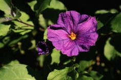 types of purple flowers that reseed? | TYPES OF PURPLE FLOWERS