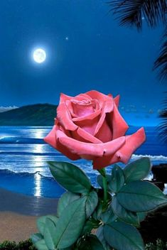 @Love is Endless Beautiful Pink Roses, Beautiful Flowers Wallpapers, Cut Flowers, Paper Flowers, Good Night Flowers, Love You Images, Flower Video, Image Nature, Rose Images