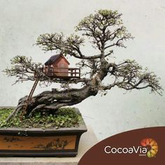 I've never seen a tiny little tree house in a bonsai. This calls for coolest bonsai ever!