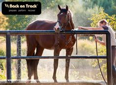 Great for muscles, ligaments, tendons and joints. Products for horses, dogs and people. Visit www.backontrackproducts.com  ...