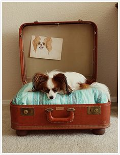 How nice to pack this suitcase up for your little pup when you are going to visit.  Gives your dog a familiar place to relax when you are in unfamiliar surroundings and a comfy place to rest at home.  Clever touch with the photo pinned on the top.