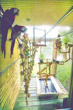 Parrot play area: How cool! Parrot Pet, Parrot Toys, Parrot Bird, Parrot Cages, Best Pet Birds, Budgies, Parrots, Cockatiel, African Grey Parrot