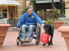 Train your dog to pull a wheelchair - also a link to the service vests made for pulling