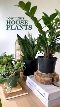 Hanging Plants, Potted Plants, Flowering House Plants, Tall Plants, Tomato Plants, Green Plants, House Plants Decor, Indoor House Plants, Indoor Plant Decor