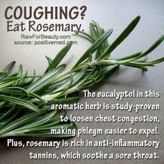 Coughing? Eat Rosemary The eucalyptol in this aromatic herb is study proven to loosen chest congestion, making phlegm easier to expel.  Plus...