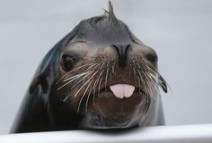A sea lion at the Aquarium of the Society for Conservation of Wildlife Coney Island in New York. The aquarium was destroyed by Hurricane Sandy and will reopen tomorrow. (AFP)