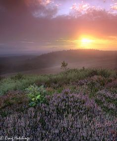 ♥ ♥ Life on The Moors...