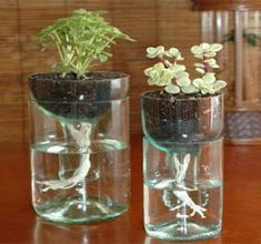 cara menanam hidroponik sederhana