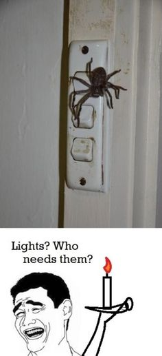 yep...I'd go medieval on the lights...if they could live without lights...so can I...