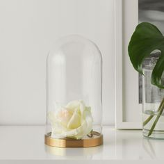 IKEA - BEGÅVNING, Glass dome with base, The glass dome with base can be used to display your favorite decorative items. Glass Bell Jar, The Bell Jar, Glass Domes, Glass Vase, Ikea Wedding, Wedding Hacks, Wedding Ideas, Wedding Stuff, Wedding Decorations