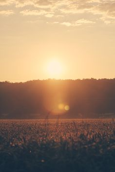Morning sun By Florian J. Färber -=-