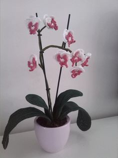 1000+ images about Orchidee on Pinterest Orchids, Orchid ...