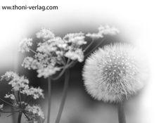 """Pusteblumen und Vergissmeinnicht in Schwarzweiß. Dieses Bild ist nur in der Geschenkbuchausgabe von """"Der Garten der alten Dame"""" enthalten."""