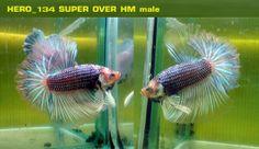 SUPER OVER HM male