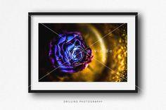 LILA BLUMEN FOTOGRAFIE Flower Photography Großformat von TAVIDshop