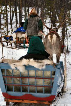 Reindeer safari (1) | Saariselkä, buy reindeer safaris from www.saariselka.com #reindeer #reimdeersafari #poro #porosafari #weeklyprogram #saariselkä #saariselka #saariselkabooking #saariselankeskusvaraamo #astueramaahan #stepintothewilderness #lapland
