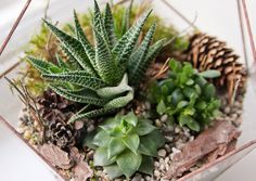 Find mini garden stock images in HD and millions of other royalty-free stock photos, illustrations and vectors in the Shutterstock collection. Garden Images, Build Your Own, Terrarium, Succulents, Stock Photos, Green, Plants, Eco System, Diy Ideas