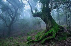 Dünyanın En Yaşlı Ağaçları  Normalde pek bu konularda ilgim olmamasına rağmen istatiklerini görünce yazmaya değer güzel bir konu olarak düşündüm. Aslında bu yazıda göstereceğimiz en yaşlı ağaçlar gerçekten de en yaşlı mı bilemeyiz çünkü dünyadaki tüm ağaçların yaşı ölçülmedi sonuçta. Şu ana kadar ölçülmüş en yaşlı ağaçlar listelenmiş....