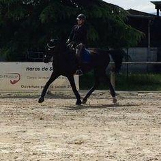 Top séance avec @PierreVolla  Un cheval qui revient de loin, très à l'écoute pendant le cours #Hollywood  #dressuurpaard