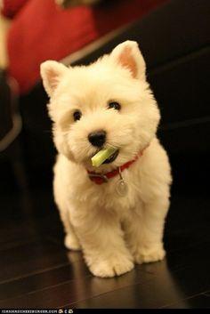 Teddy bear haircut.