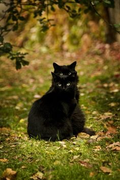 ☾☾ Halloween Ѽ All Hallows ☾☾ ♥ Black Cats