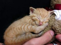 Police officer rescued & adopted kitten from garbage can. My heart melts.