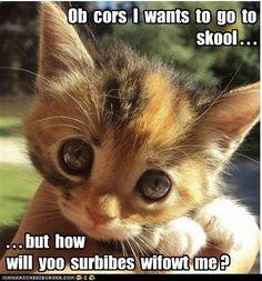 Cutest kitty, huge eyes...