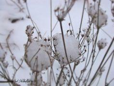Frozen flowers in winter. PolkaSpot Homestead. 2013.