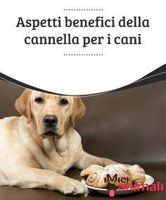 Aspetti benefici della cannella per i cani  Sapevate che i #cani adorano la #cannella? Proprio così, questa particolare spezia è una vera e propria #leccornia per i nostri amici a quattro zampe, e apporta inoltre numerosissimi #benefici alla loro #salute. #ALIMENTAZIONE