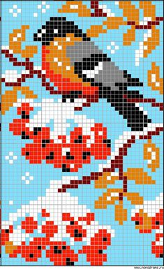 Image result for blue bird alpha pattern