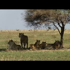 joselove tour safaris:  Plan your trip in all Parks in Tanzania and all P...
