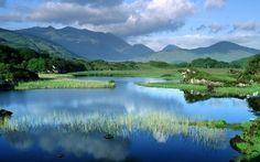 Lake in the meadow wallpaper