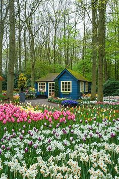 Though I love blue, the house in blue sort of interrupts your enjoyment of the floral display. We would be happy here :)