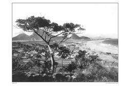 Leblon - 1919 Foto de Augusto Malta.